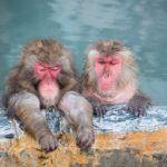 猿が芸する居酒屋で外国人をがっちり集客する